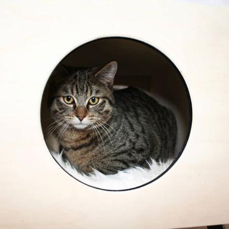 Krab cat nest bed 4 810x540