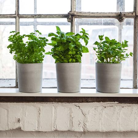 Topf Spicepots Urban Nature