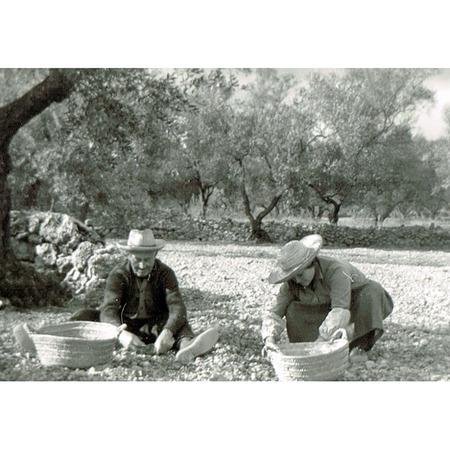 Ralda Friends Olivenöl