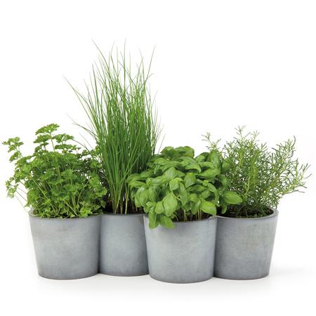 39 potpot 39 f r kr uter oder pflanzen. Black Bedroom Furniture Sets. Home Design Ideas