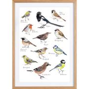 Schöne Ornithologie für die Stube