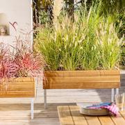 'Pflanzeninsel' für den Garten