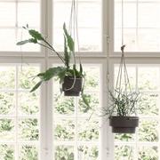 Dschungel zu Hause: 'Plant Hanger' im Set