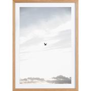 Fotografie 'Flying High'