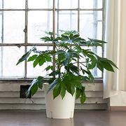 'Blumentrolley' mit Rankhilfe