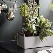 Kleine 'Plant Box'