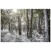 Fine-Art Print 'Bosque Blanco'