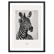 Zebra Portrait - Bild mit Holzrahmen / 50 X 70