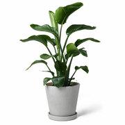 Zimmerpflanze 'Die Kämpferin'