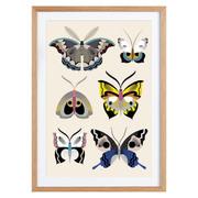 Illustration 'Butterflies'