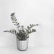 The minimalist x wire bin by menu with plant 1024x1024