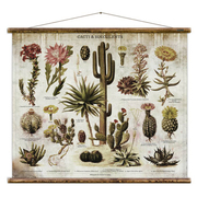 Cacti and succulents 03