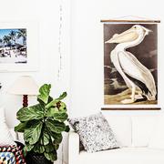 American pelican 02