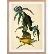 Vogelstudie 'Connecticut Warbler' gerahmt