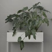 'Plant Box'