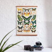 Papillons photo 2400