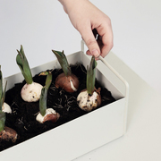 Atn1024 plantboxsmall 1