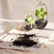Design house stockholm grow gewaechshaus pflanzen ambiente