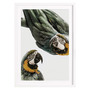 Juniqe Birds of Paradise mit Holzrahmen / 50 X 70 Weiss