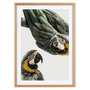 Juniqe Birds of Paradise mit Holzrahmen / 50 X 70 Eiche