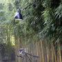 Lampegras modele 304 xl 90 kg25wdp0